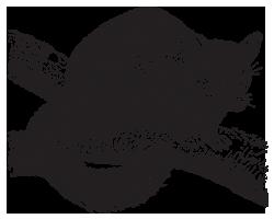 possum-transparent